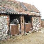 Bob stable 8 White hall farm
