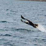 Fish Eagle Fishing