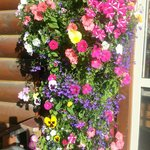 Beautiful flowers at entry of resort.
