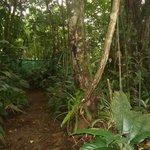 Frog Sanctuary