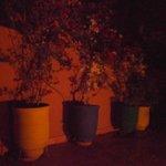 piante in terrazza la sera