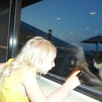 Kitty watching our meal at Peppercorns inside Ramada Plaza