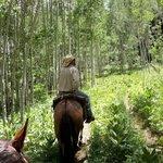 Riding through the aspens