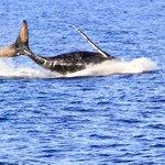 January through March is peak whale season