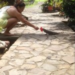Feeding the iguana right outside the room