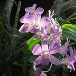 Jardin avec des orchidées sublimes