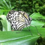nature at its best on display at Straffan Butterly Farm