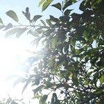 Sunshine through the trees at La Maison Verte