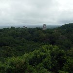 View from the top of Pyramid - Tikal