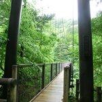 Mikaeri Suspension Bridge
