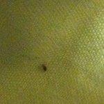 bug in bedding