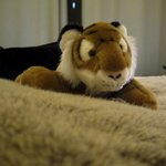 The plush toy that came with the room. Not free to take home!