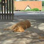 Rex the farm dog.