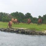 the beautiful wild horses