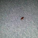 huge cockroaches!