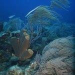 Reef & Trumpetfish