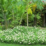 Beautiful flora of Villas Rio Mar, Dominical, Costa Rica