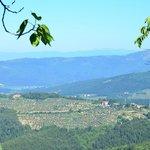 View Tenuto Lonciano