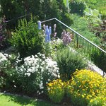 Flowering Shrubs and annuals near the Putting Green