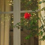 A Rose and Repose
