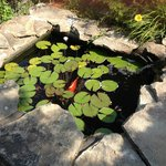 Koi pond at entrance to clubhouse