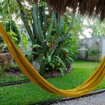Relaxing hammock and yard