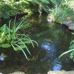 Pond outside conservatory
