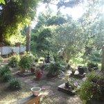 Garden behind restaurant