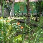 jardin especial para los colibries