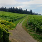 View of the Grey Monk Vineyards