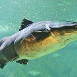 Catfish Aquarium KL Zoo