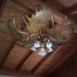 Chandelier in the dining room from moose antlers