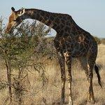 So Tall!!