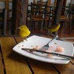 Desayunando en compañia