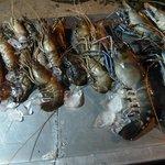 Giant prawns