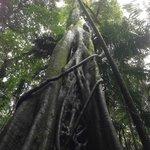 Amazing rainforest walk