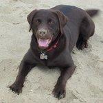 Me on the beach, where's the ball?