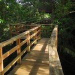 Elevated walkway to bird viewing deck