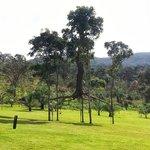 Árvore Suspensa