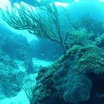 Reefs of Cozumel