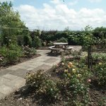 Our beautiful rose garden