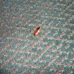 Cockroach #2