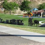 Bighorn sheep near hotel at Hemenway Park, Boulder City, Nevada