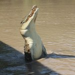 Jumping Crocodile & Wildlife Tours -Day Tours