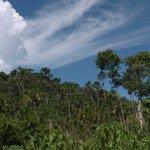 Manu rainforest