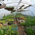 The polytunnel greenhouse where the Hotel grow all their own produce.