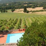 view of pool and surrounding vineyards from breakfast terrace