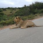 In Addo