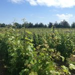 Vineyard - ask the owner Q's and he's so eager to teach!
