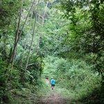 Jungle trail hike